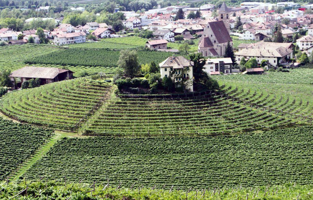 Vigneti in Alto Adige. l'Italia offre una fantastica selezione di rossi leggeri, coltivati soprattutto nelle alpi o dove il clima fresco consente una produzione dal basso grado alcolico, tannini gentili e limitata corposità.