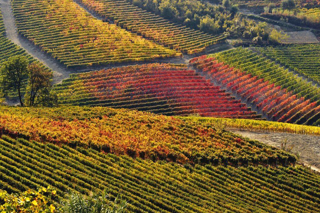 Trend Vino 2017.Oggi una sete inestinguibile per il nuovo caratterizza i bevitori. Cercano con curiosità vini ottenuti da uve meno note ed al contempo storie di produttori emergenti e nuove modalità di acquisto.